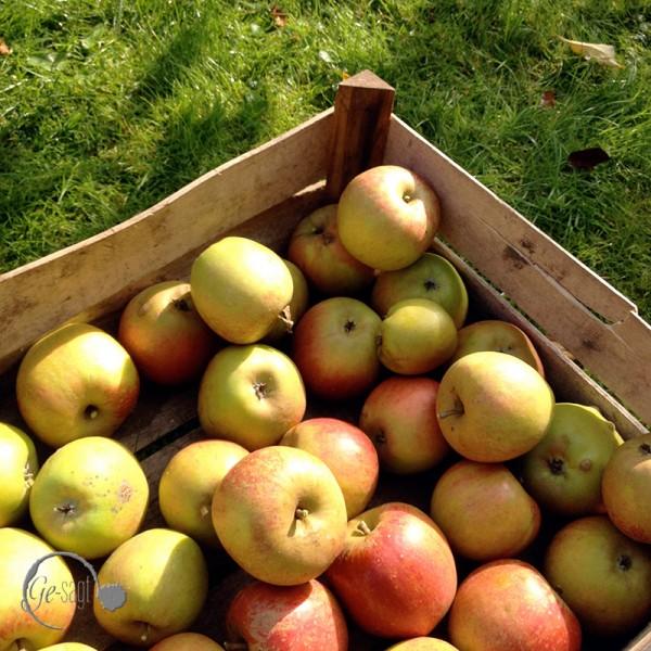 Bild von Äpfeln für die Apfel Marmelade